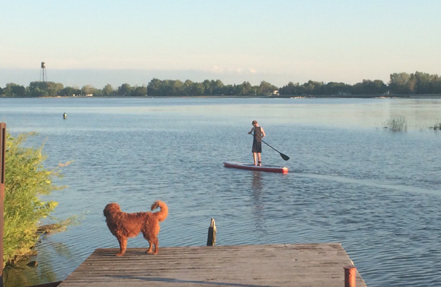 Paddle boarder dog on a deck