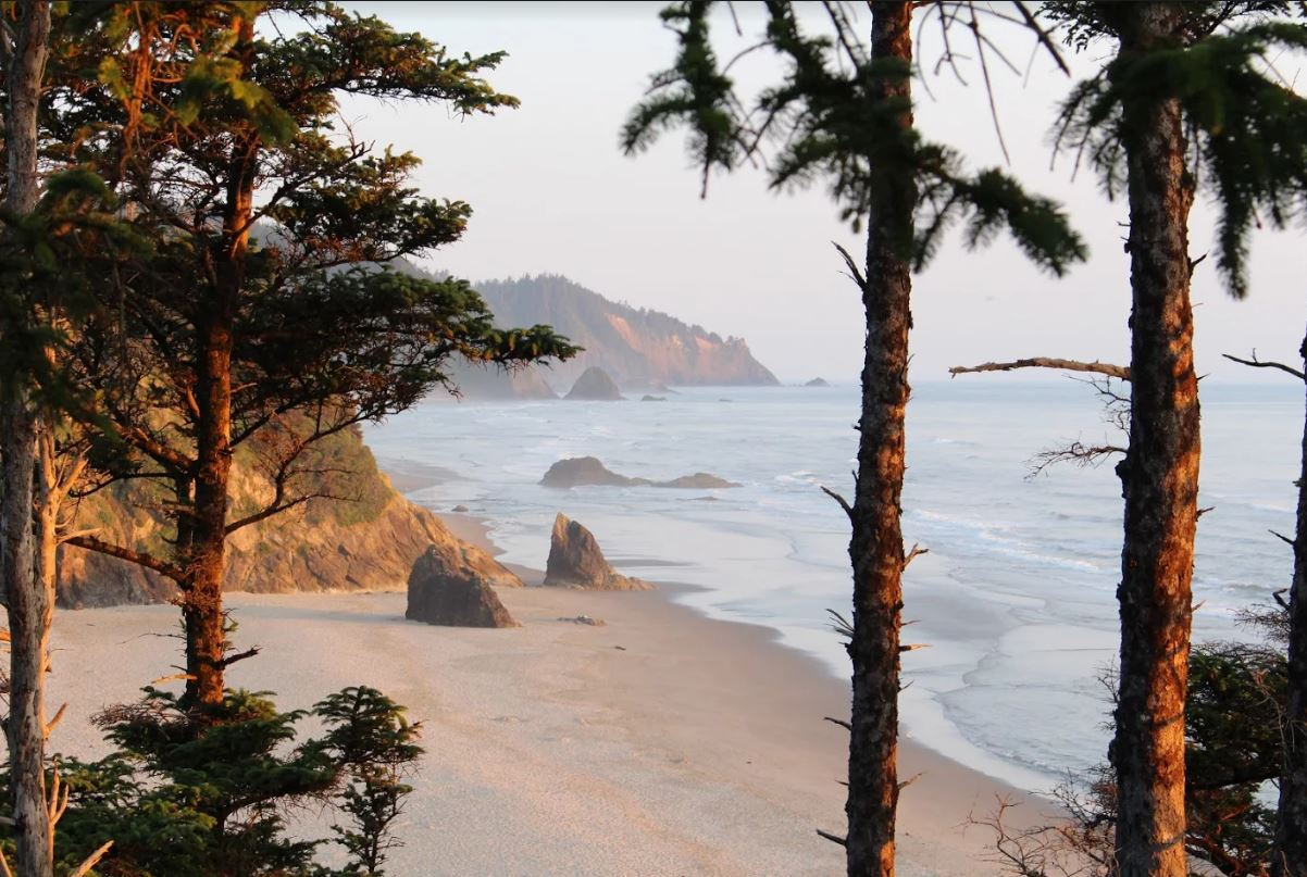 Trees, beach and Ocean of west coast America