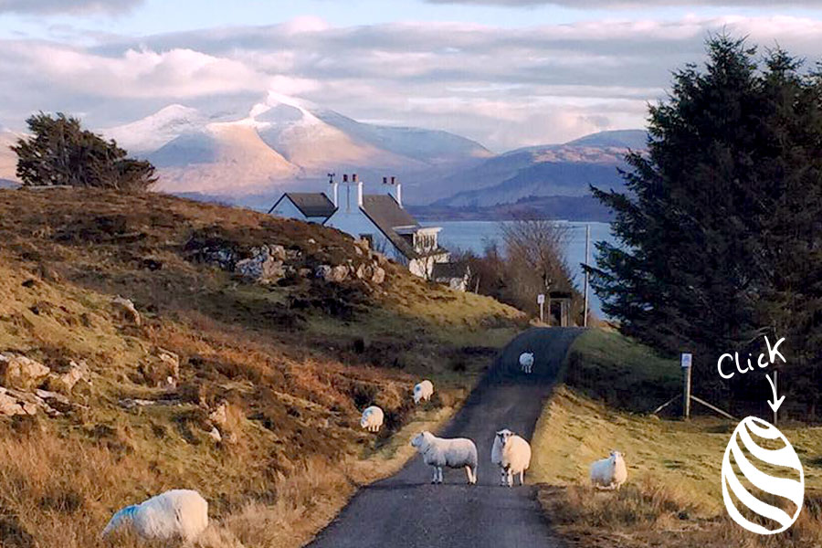 sheep on road in Scotland by Bee Leask