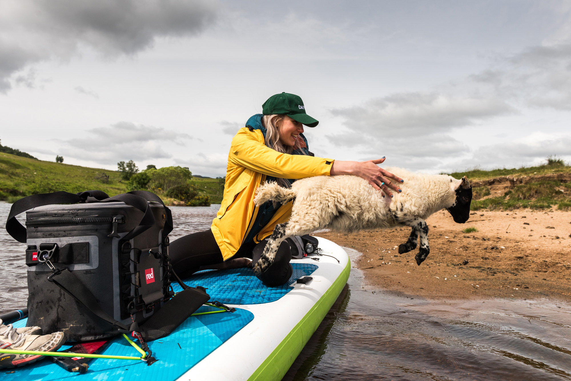 laughing woman helping a lamb off an inflatable paddle board