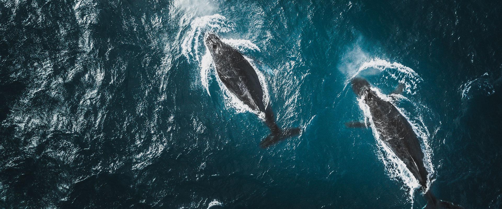 blog body love the oceans