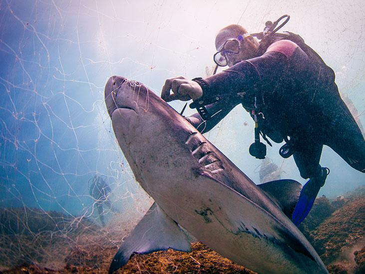 blog body lovetheoceans fishing research